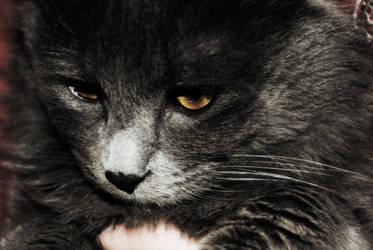 cat by CIuFixHell