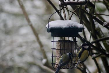 Winter Birds by Meterious