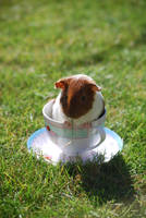 Guinea Pig Tea No.1 by Zombie-Jaw