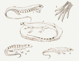Some of the first Reptiles by briankroesch