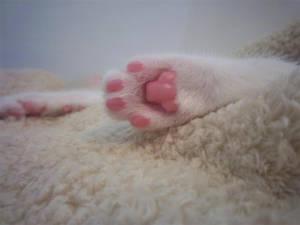 Pink by OllietheMutt