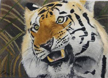 El Tigre by skippypoof
