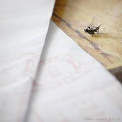 post-fly by kihsleek