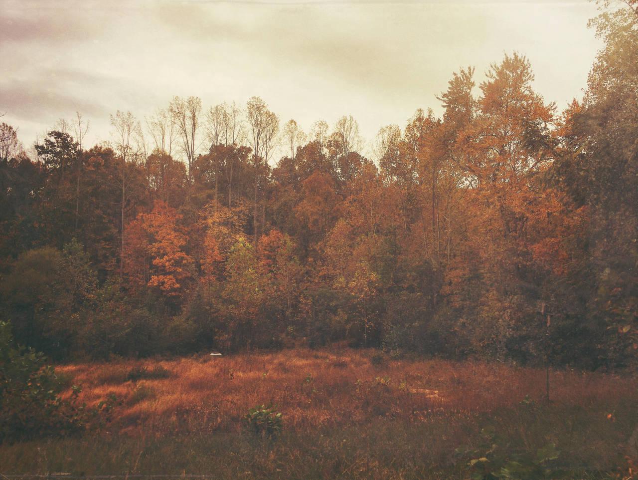 Indian Summer | Charlottesville, VA | 2016.11.1 by jarsonic