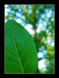 Leaf by EvlReaper04