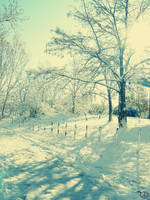 winter komm by igloolita