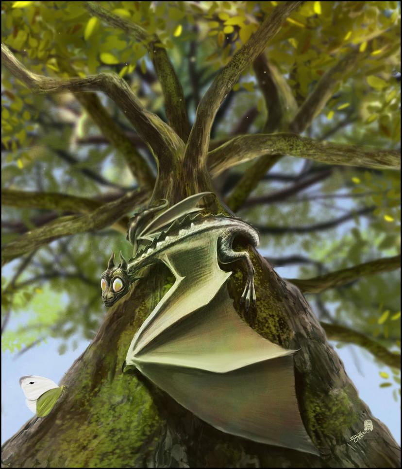 Tillydragon by AndyFairhurst