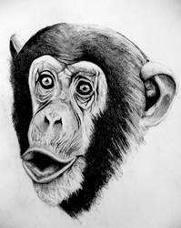 Chimp by Palmer0047