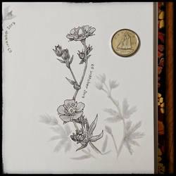 Inktober 05 - Silvery Cinquefoil by Elementis