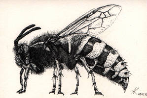 wasp by Nana749