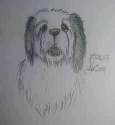 Dogface by Akira1412