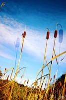 Reeds by aaronisbadnews