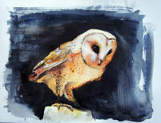 Barn Owl by 8025glome