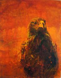 Hawk by 8025glome