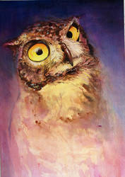 Big Eyed Owl by 8025glome