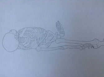 Life-Drawing Class - Skeleton 1 by Rose-Hunter
