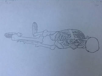 Life-Drawing Class - Skeleton 3 by Rose-Hunter