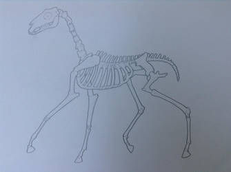 Animation Class - Cartoon Horse Skeleton by Rose-Hunter
