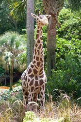 Giraffe by EarthEmerald