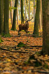 When the Woods were Young by JanPusdrowski