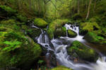A hunch of Green by JanPusdrowski