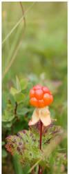 Cloudberries by sisko87