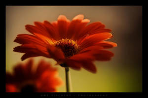 Red by Crossie
