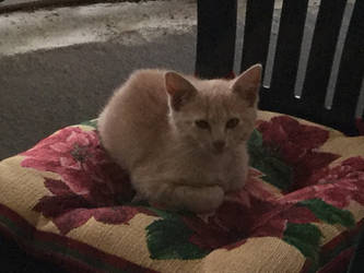 Cushion Kitty by Viper-X27