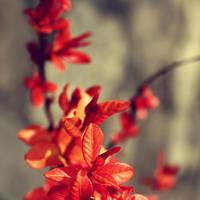 sunny red by lorienzeren