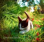 Explorer kitty by ftourini