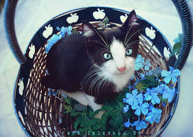 A kitten a day by ftourini