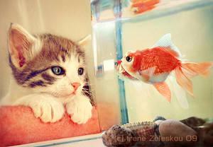 hello fish by ftourini