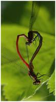 Spring love by Riangel