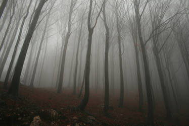 Foggy Forest 2 by Banana-Workshop