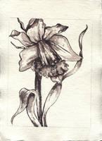 flower for frame by density-tmr