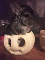 Chuffy Wants To Say Happy Halloween And Good Night by HauntingsTrash