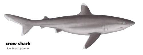 Crow shark by damouraptor