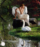 Swan Garden by Pickyme