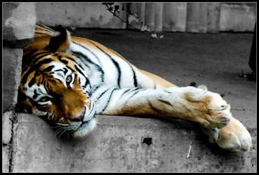Lazy cat by Dee-ehn