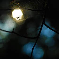 Predator under the Moonlight by ArgentumChloride
