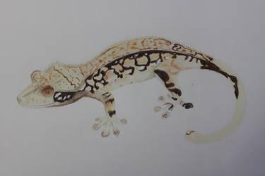WIP Crested Gecko by beachgecko