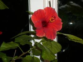 Flower by Korra