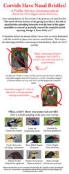 Corvids Have Nasal Bristles PSA by SageKorppi