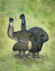Extinct Emus by SageKorppi