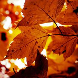 autumn awakens by ContagiousPixie