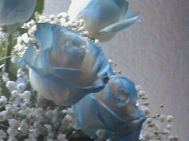 Beautiful Blue Roses 4 by SuperSonicGirl79135