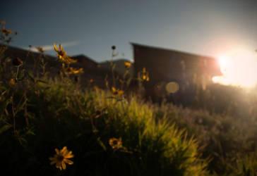 Honney in the sun by vegastev