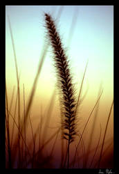 Agrostis Avenacea by the Sea by samtheflash82