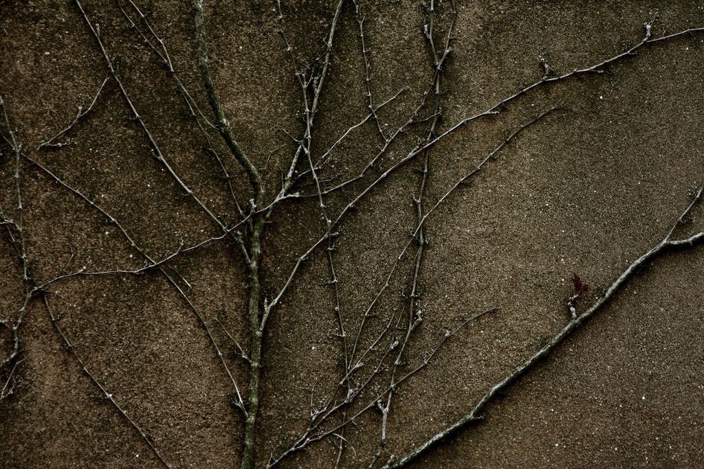 Texture 83 by deadcalm-stock