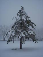 Winter 2007: 6 by FollowinTheBlackBird